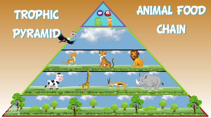 The Animal Food Chain