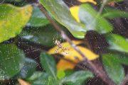 Curiosidades de las arañas