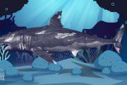 Curiosidades de los tiburones