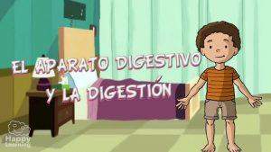 el aparato digestivo y la digestión - video educativo