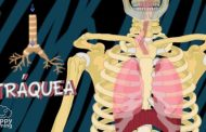 L'aparell respiratori i la respiració