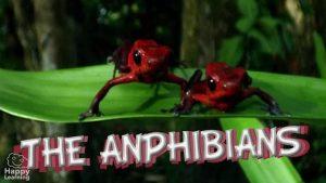 The Amphibians