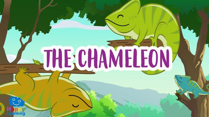 The Chameleon, A Multicolor Reptile