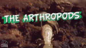 The Arthropods