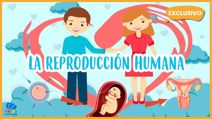 Vídeo Educativo La Reproducción Humana Para Niños Happy Learning