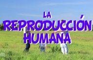 La reproducció humana: fecundació, embaràs i part