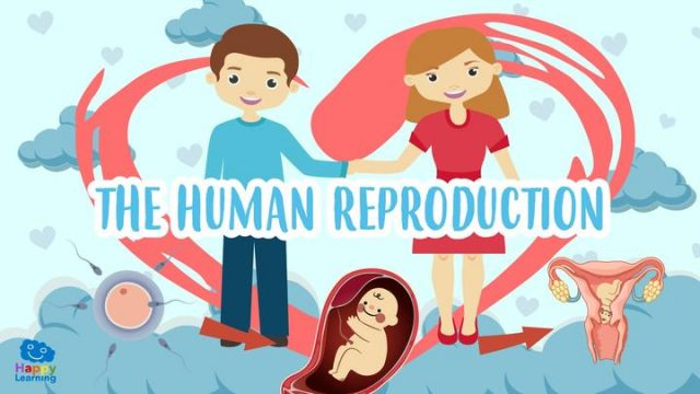 the human reproduction