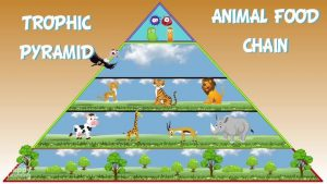 The Animal Food Chain