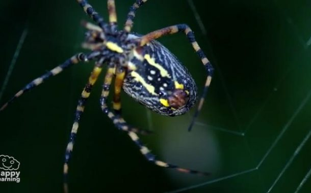Interesting facts about spiders