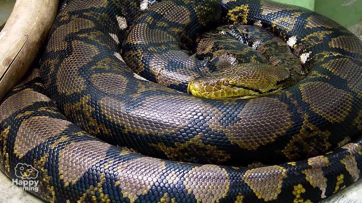Curiosidades de los reptiles