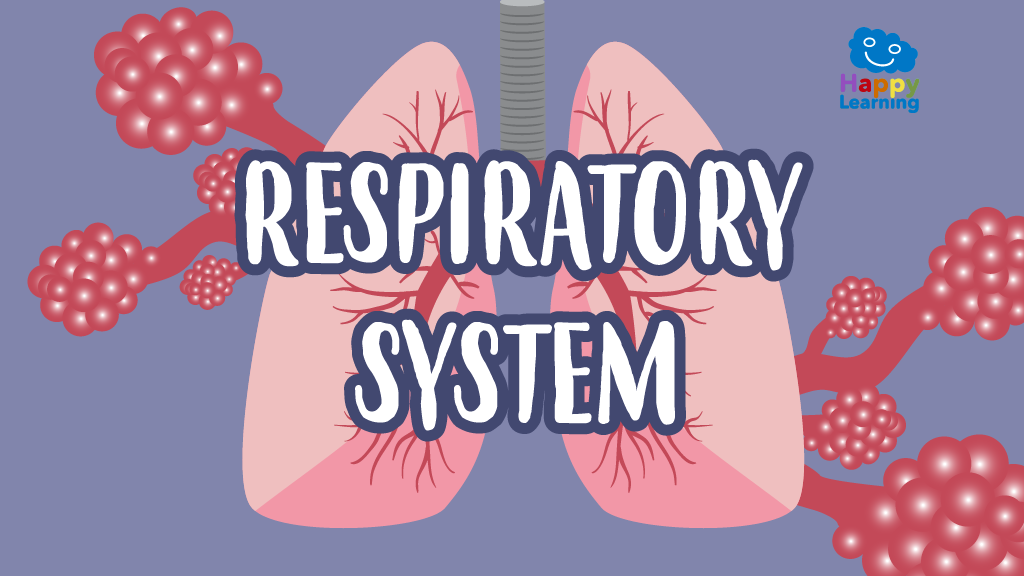 Word Search: Respiratoy System