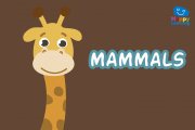 Quiz: The Mammals