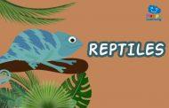 Quiz: Los Reptiles
