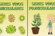 Los seres  vivos unicelulares y pluricelulares