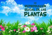 La reproducción sexual de las plantas. Partes de una flor.