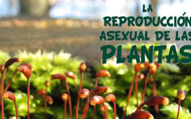 La reproducción asexual de las plantas.