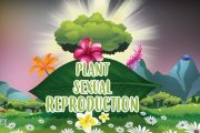 Plant Sexual Reproduction