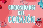 5 Cosas que no sabías del corazón | Curiosidades fascinantes para niños