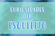 5 Cosas que no sabías del esqueleto humano | curiosidades fascinantes para niños