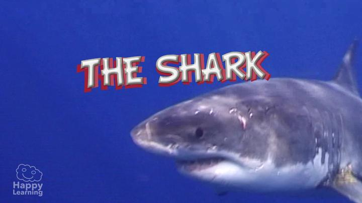 Sharks: The scariest animals in the sea