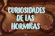 5 Cosas que no sabías de las Hormigas | Curiosidades fascinantes para niños