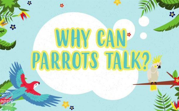 Why can parrots talk? | Educational Videos for Kids