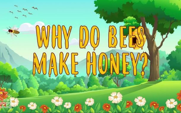 Why do Bees make Honey? | Educational Videos for Kids