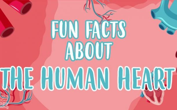 The Human Heart: AMAZING FUN FACTS