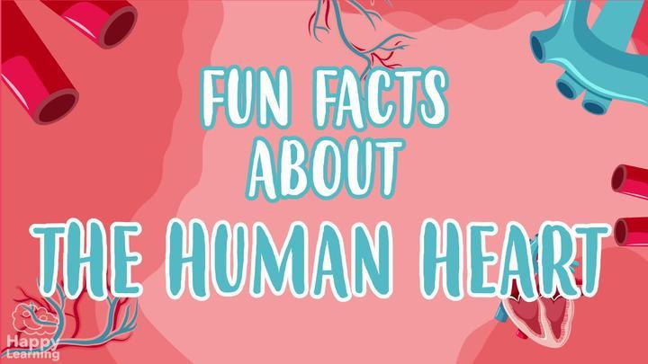 The Human Heart: AMAZING FUN FACTS