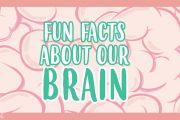 The Human Brain: AMAZING FUN FACTS