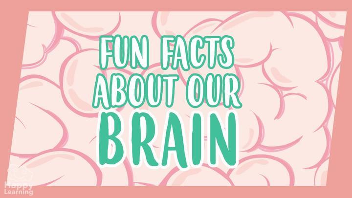 The Human Brain: AMAZING FUN FACTS