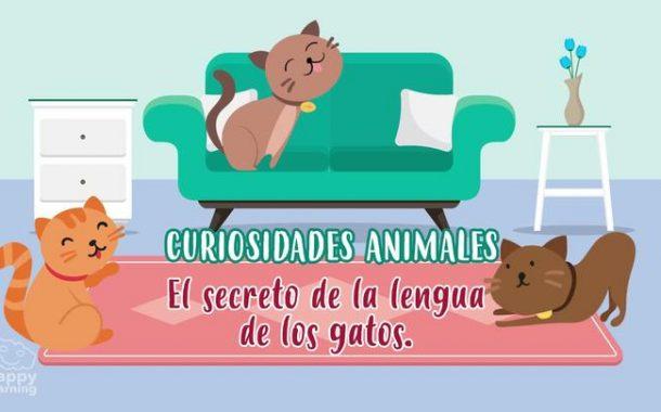 El secreto de la lengua de los gatos