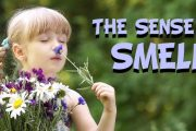 Five Senses: The Sense of Smell