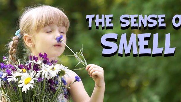 Five Senses: The Sense of Smell