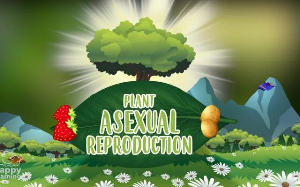 Plant asexual reproduction