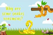 Why are some snakes venomous?