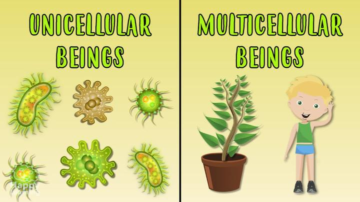 Unicellular and Multicellular beings