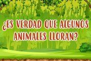 ¿LOS ANIMALES LLORAN?